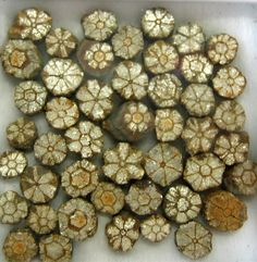 "Mica pseudomorphs after complex cordierite-indialite intergrowths, known in Japan as ""sakura ishi (cherry blossom stones)"". Individual crystal sections about 5 mm in diameter. Rochas, Mineral Stone, Crystals Minerals, Rocks And Minerals, Crystals And Gemstones, Stones And Crystals, Metamorphic Rock, Rocks And Gems, Love Rocks"