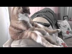 Funny Cats Sitting like Humans