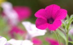 7 #Plants for a Very Sunny Balcony ...