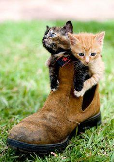 Kitties in a Boot