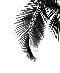 #black, #white & #tropical  The perfect combination!