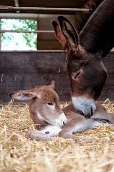 You can see the love and joy in mama's face and the contentment in baby's face. So sweet! #donkeys Visit our page here: http://what-do-animals-eat.com/donkeys/