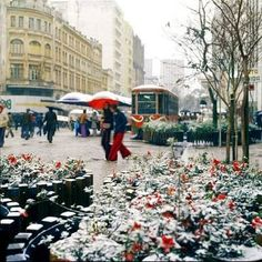Curitiba, my city .  I have walked there many times.... and yes it snows sometimes....
