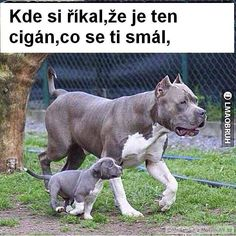 A guilty dog is funny and cute. These funny videos of guilty dogs and puppies are hilarious. Animal Jokes, Funny Animals, Cute Animals, Funny Animal Pictures, Dog Pictures, Funny Kids, Funny Cute, Perros Pit Bull, Funny Dog Memes