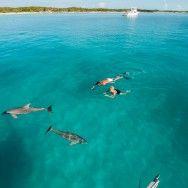 Swimming with dolphins near Great #Exuma #Bahamas
