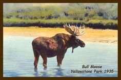 Bull Moose in Yellowstone Park 1935. Quilt Block printed on cotton for quilters. Ready to Sew.  Single 4x6 quilt block $4.95. Set of 4 quilt blocks with pattern $17.95.