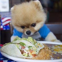 Pin for Later: 13 Dogs That Are So Hot on Twitter Right Now Jiff, 38K Followers Follow Jiff.