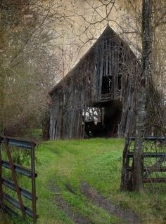 I hate to see a neglected barn. Looks like my childhood play house is ancient. Haunted Barn by Lisa Moore