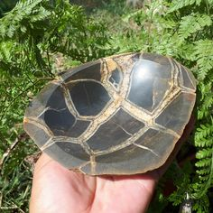 Your place to buy and sell all things handmade Septarian Stone, Stone Bowl, Gray Rock, Brown Line, What Is Coming, Snack Bowls, Candy Bowl, Calcite Crystal, Jewelry Dish