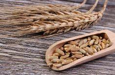 Più conosciuta è la farina di segale che viene utilizzata per la preparazione del tradizionale pane di segale o pane nero. La farina di segale si ottiene dalla macinazione dei chicchi di segale e la s