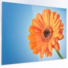 "DesignArt 'Orange Daisy Gerbera Flower on Blue' Photographic Print on Metal Size: 40"" H x 48"" W x 1"" D"