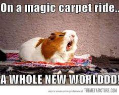 Image result for screaming rabbit meme