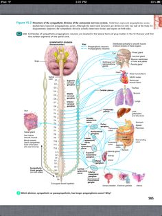 Principles of Anatomy and Physiology, Chapter 15, The Autonomic ...