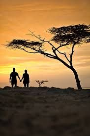 african sunset silhouette acacia tree - Google Search