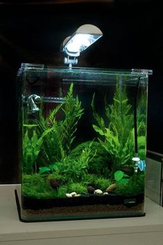 Dennerle Nano Cube review | Features | Practical Fishkeeping