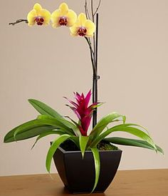 Mothers Day Orchid Garden and other flowers & plants at ProPlants.com