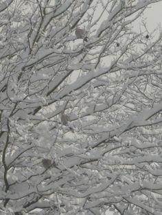 sneeuw 2005