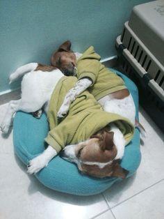 #Doglife!