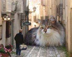 New Breed Alert: Mega Cat!