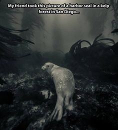 No, this is not a painting, but rather a real photograph of a harbor seal in a kelp forest.