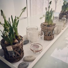 "61 Likes, 5 Comments - Nanna Tuomisto 💁✨ (@be_a_star_at_home) on Instagram: ""Time for some real spring flowers ✨🌱✨☀️✨🌱✨☀️✨🌱✨☀️✨🌱✨ Laitetaanpa välillä oikeitakin kukkia #spring…"""