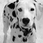Black and White / Mundo Animal