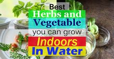 There are herbs and vegetables that regrow in water INDOORS you can grow them from scraps and use in salads and toppings. Take a look!