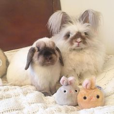 Have a sweet day! Lop Bunnies, Cute Baby Bunnies, Funny Bunnies, Rabbit Pictures, Cute Animal Pictures, Animals And Pets, Baby Animals, Cute Animals, Chinchilla