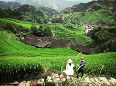 Longsheng, China. Go up to the Longi / Longsheng rice terraces and admire the amazing view like this. So green, so beautiful, so natural 🇨🇳😍💚🍚