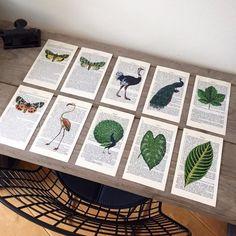Print op franse vintage pagina. Flamingo, mot/vlinder, pauw, blad, struisvogel. Het Noteboompje