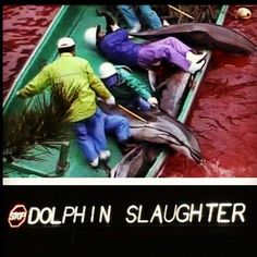 Stop the dolphin slaughter in Japan- FOR EVERY DOLPHIN IN CAPTIVITY, IT'S FAMILY IS GRUESOMELY SPEARED RIGHT IN FRONT OF THEM. THEY DIE FOR YOUR ENTERTAINMENT. YOU CAN STOP IT. VOW TO NEVER BUY A TICKET TO SEAWORLD, MARINRLAND OR EVEN THE GEORGIA AQUARIUM.
