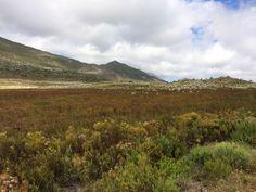 Fynbos by Treacy-ann Markham on 500px