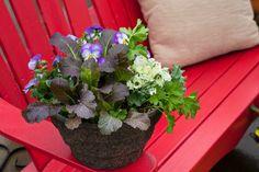 Vegetables in the Landscape- Leafy greens and flowers! Home Grown Vegetables, Vegetable Garden, Presents, Landscape, Flowers, Plants, Inspiration, Gifts, Biblical Inspiration
