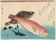 Sweet Sea Bream, Mebaru, and Horseradish, from an untitled series known as Large Fish  HIroshige Utagawa