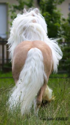 pictures of palomino horses Palomino, All The Pretty Horses, Beautiful Horses, Animals Beautiful, Horse Photos, Horse Pictures, Farm Animals, Animals And Pets, Cute Animals