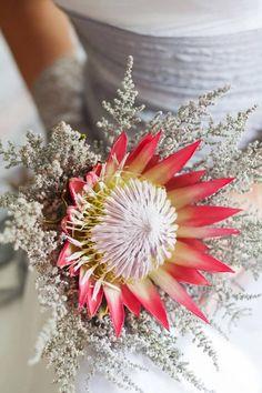 Bride holding her beautiful protea flower bouquet by Andre Van Der Veen, via Dreamstime Flor Protea, Protea Art, Protea Bouquet, Protea Flower, Hand Bouquet, Protea Wedding, Flower Bouquet Wedding, Crystal Bouquet, Scrappy Quilts