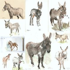 ÂNES https://cheval2couleur.wordpress.com/ donkey painting peinture âne Donkey Art