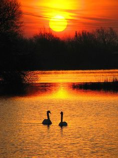 nature pictures, beautiful sunset and two swans Idyllic outdoor swimming pools, mesmerizing candles or softly glowing lanterns create gorgeous, romantic, and mesmerizing outdoors at night Beautiful World, Beautiful Places, Beautiful Pictures, Beautiful Nature Images, Amazing Sunsets, Amazing Nature, Image Nature, Nature Nature, Beautiful Sunrise