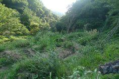 Google Image Result for http://nakazora.files.wordpress.com/2011/09/garden_august2.jpg