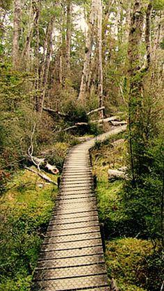 Forest boardwalk  source Flickr.com