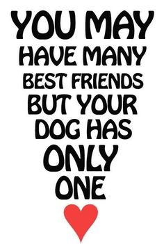 You are the best friend of your dog #petquotes #dogquotes http://www.nojigoji.com.au/