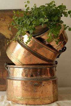 vintage copper pots with a plant