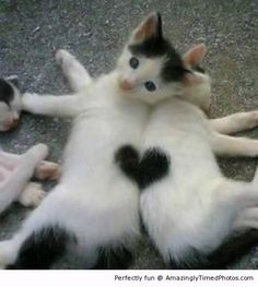 Assemble together beautiful heart – These two kittens just love showing their heart.