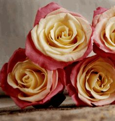 Preserved Roses Natural Bi-color Yellow & Pink (9 roseheads) Flowers