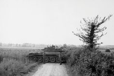 AUG 20 1944 Polish armour holds SS counter-attack at Mont-Ormel Cromwell tanks of the 10th Mounted Rifles Regiment (1st Armoured Division) use a hedge for cover during the Operation 'Totalise' in Normandy.