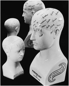 I want one of these phrenology heads! :)
