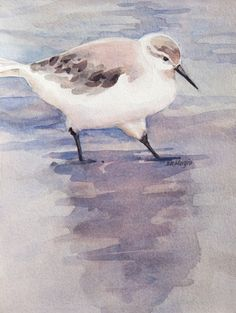 Cape Sandpiper  by Sharon Morgio - Print available for purchase