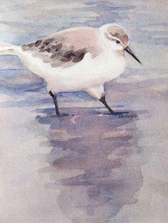 Cape Sandpiper by Sharon Morgio - Print available for purchase