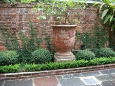 New Orleans boxwood border and brick!