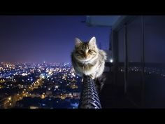 10 Hours of Relaxing Music That Help You To Get Into Quick Sleep💖 - YouTube Cute Cat Wallpaper, Hd Wallpaper, 1920x1200 Wallpaper, Wallpaper Keren, Backgrounds Hd, Animal Gato, Hd Cool Wallpapers, Cat Background, Photo Chat